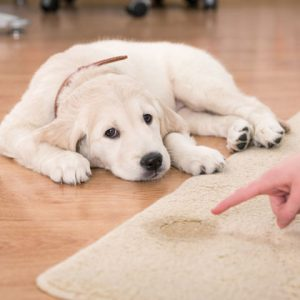 Pet Stain Removal Services Melbourne