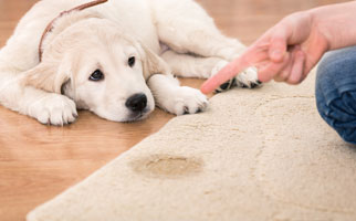 Pet Stain and Odour Removal Melbourne